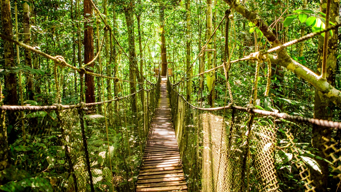 Narrow, suspended wooden bridge in the rainforest canopy with dappled sunlight, experienced on the Delfin I Amazon River Cruise.
