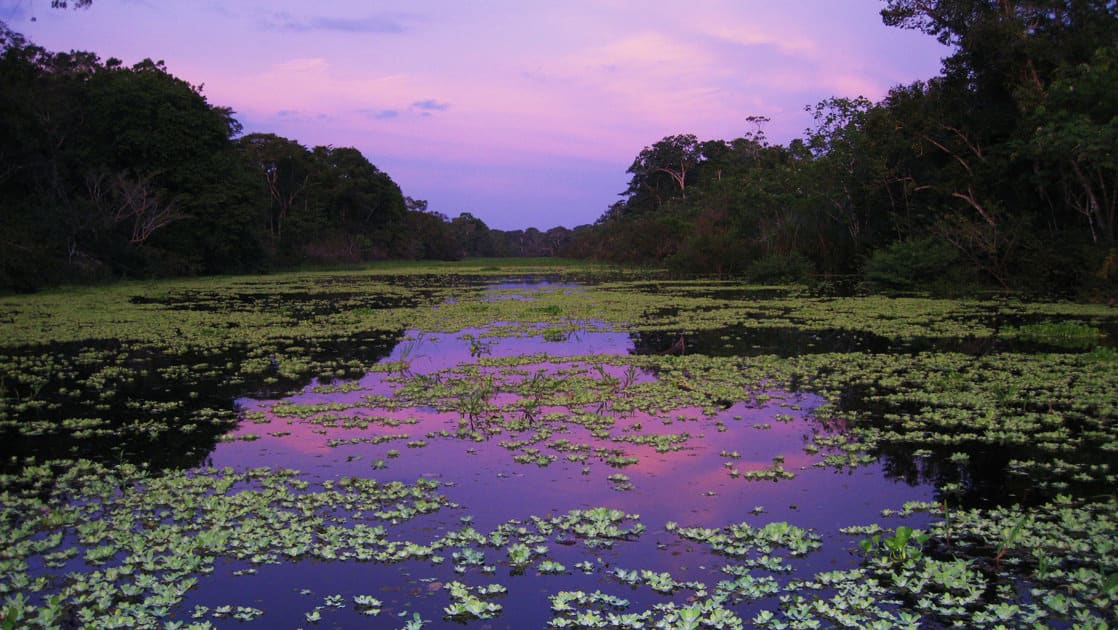 looking down the river at night with lily pads on the water and vibrant purple sky above on the delfin ii amazon river cruise