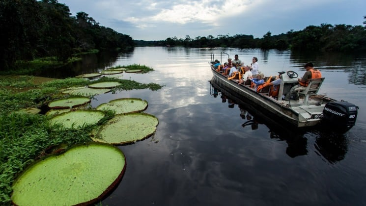 travelers in a skiff cruise down the amazon river with large green lily pads on the side of them and cloudy skies above