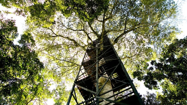 sky tower in the amazon rainforest at la selva ecolodge
