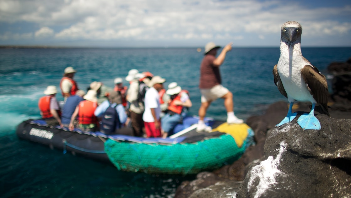 A blue footed bobby bird stands on black lava rock as an inflatable skiff holding cruise passengers dock on land behind it.