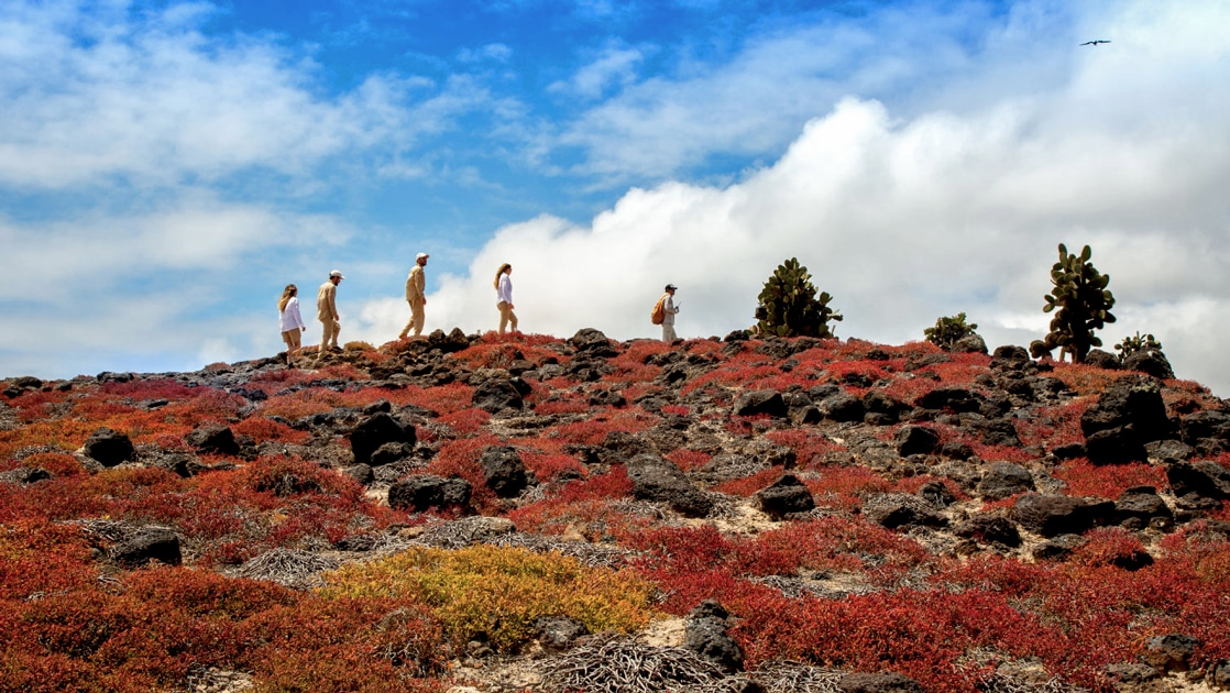 A shore excursion on a blue sky day, 5 travelers traverse the ridgeline of a hillside covered in red plant life in the Galapagos Islands.