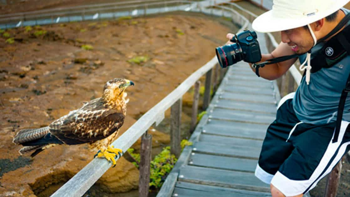 A passenger on Natural Paradise cruises takes a photo of a hawk at the Galapagos Islands