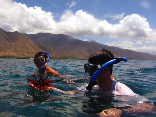 Guests snorkeling from their small ship cruise in Hawaii and looking at urchins.