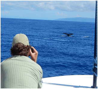 Man photographing a whale tail off a Hawaii small ship