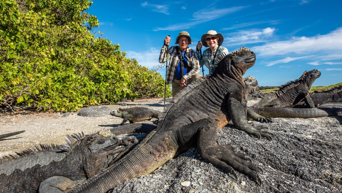 A Galapagos shore excursion aboard Isabela II ship, two travelers pose behind a group of grey and black marine iguanas.