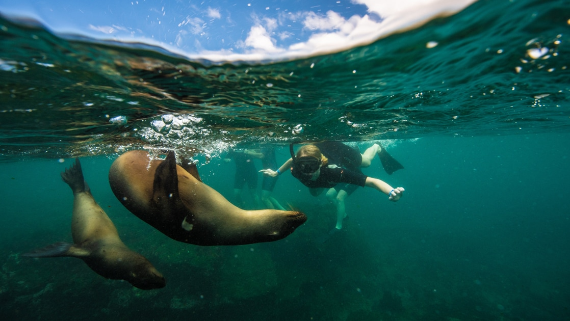 Underwater photo of a snorkeler swimming with two sea lions in the crystal clear teal water of the Galapagos islands.