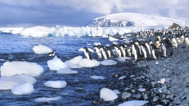 a group of penguins stands on shore in antarctica ready to get into the water that is filled with chunks of ice, with a large mountain in the distance