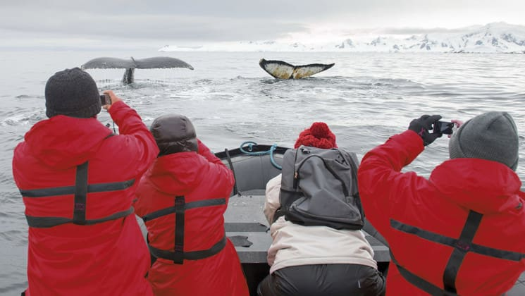 adventure travelers in a zodiac skiff take pictures of whale tails sticking out of the water on the land of penguins and icebergs antarctica expedition cruise trip