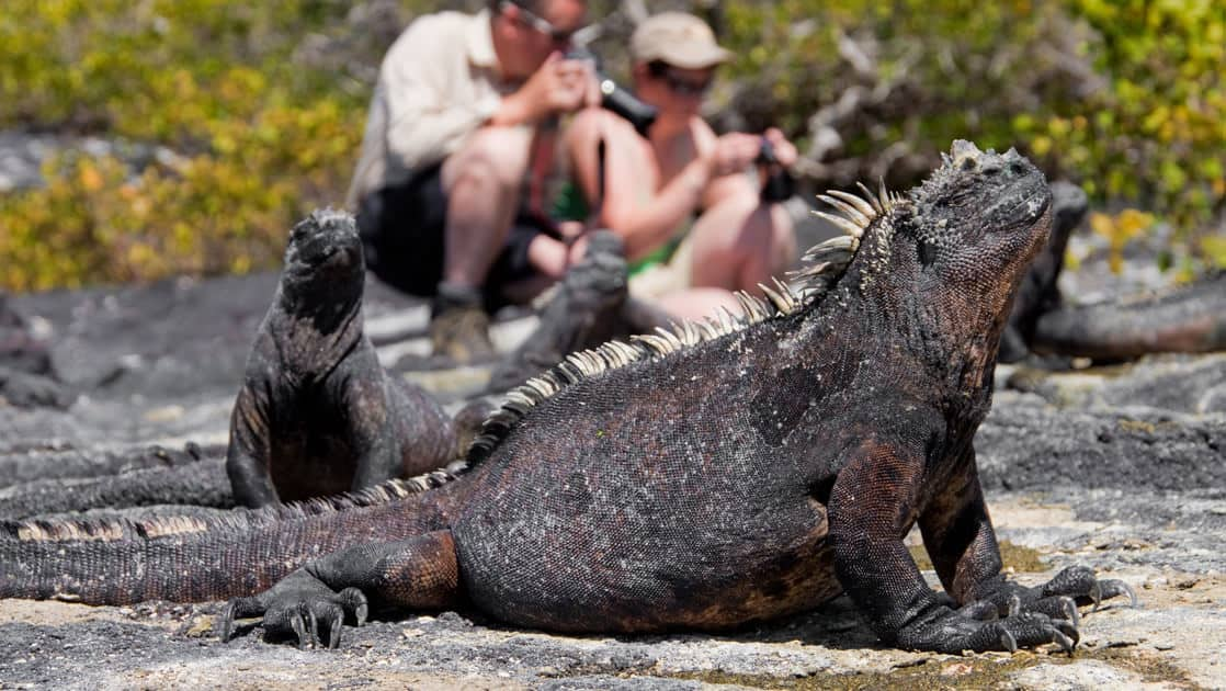 a crew of iguanas on a rocky bluff near green bushes stand in front of a group of tourists looking at their cameras at the Galapagos islands