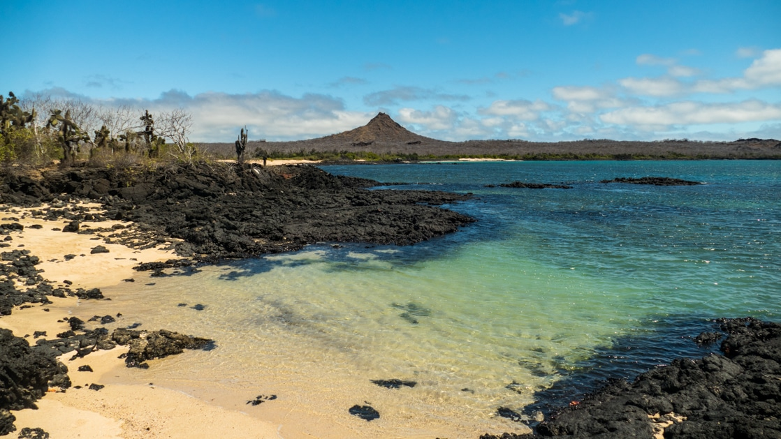 A landscape photo of a sandy beach surrounded by volcanic rock and cacti in front of the turquoise waters in the Galapagos.