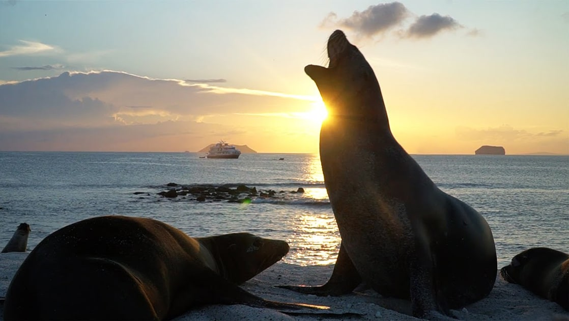 A silhouette of a sea lion howling from a beach as Natural Paradise Galapagos ship cruses along the pastel colored horizon as the sun sets.