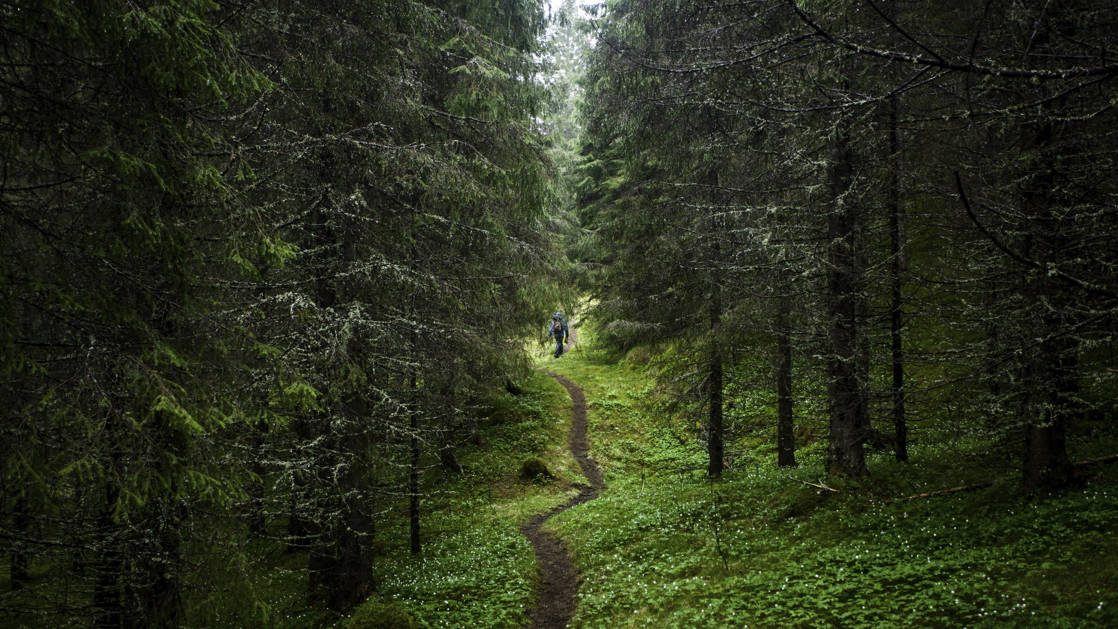 Narrow hiking trail winding through a green forest on Vega Island in Norway