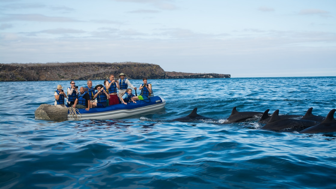 On a blue sky day a group of Galapagos cruise travelers ride an inflatable dingy all taking pictures of a pod of dolphins.