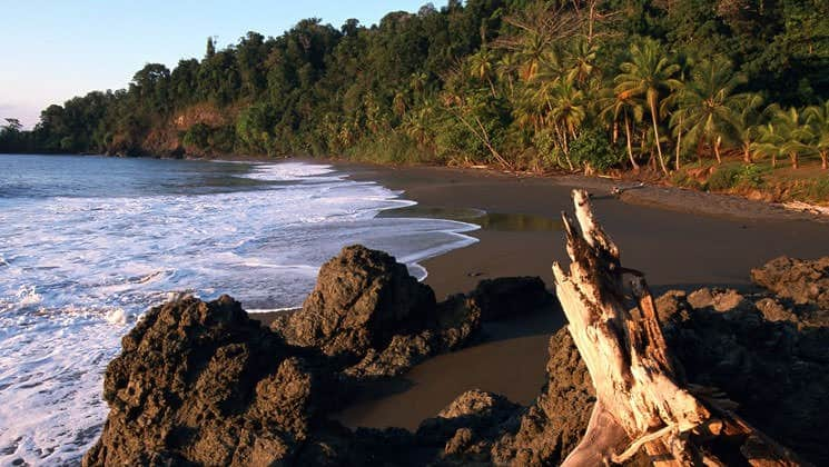 large log on beach on pacific costa rica land tour