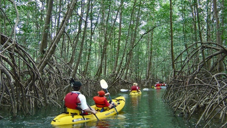 kayakers paddle beside mangroves on pacific costa rica land tour