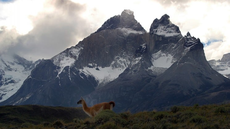 huge snow-covered mountains behind a llama seen on patagonia wildlife safari land tour
