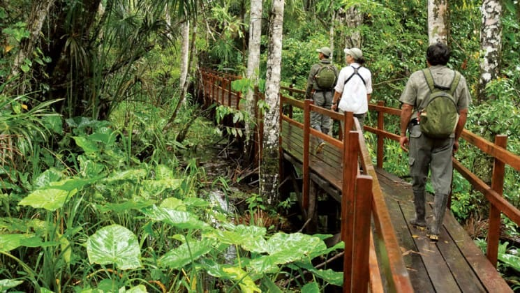 adventure travelers on an amazon jungle tour walking on a bridge through the canopy