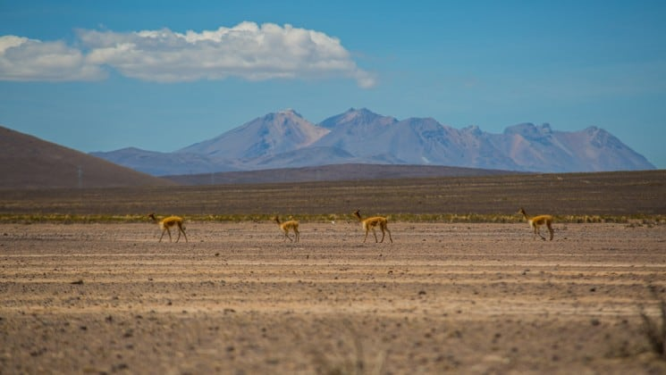 landscape of distant mountains, large plain and animals on peru highlights land tour