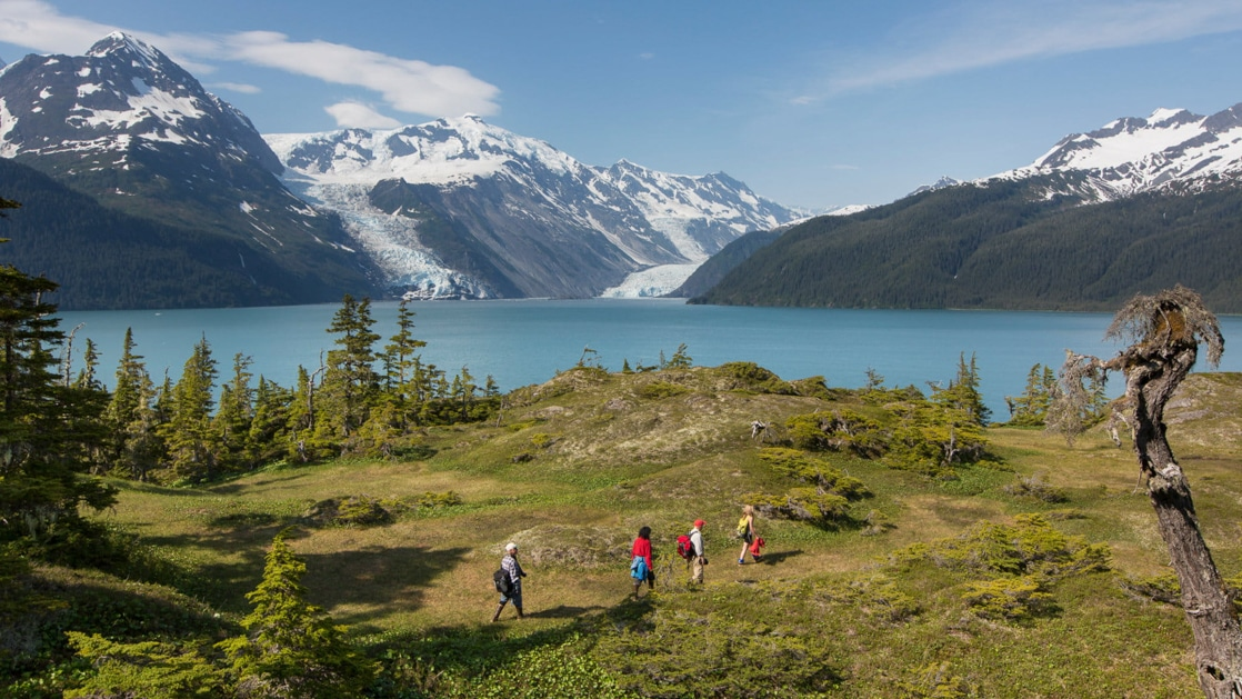 Hikers walk among bright green grass & trees on a sunny day in Prince William Sound, Alaska.