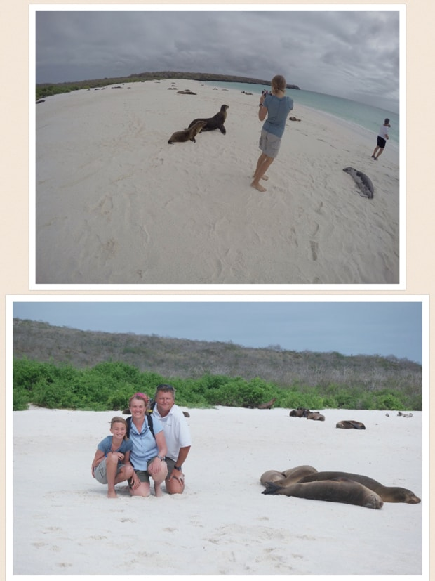 collage with a girl taking a picture of galapagos sea lions and a family posing next to sleeping seals