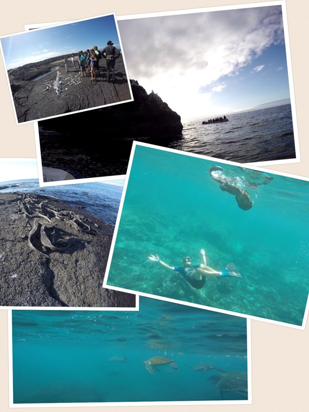 collage showing galapagos animals such as marine iguanas, turtles and a whale skeleton