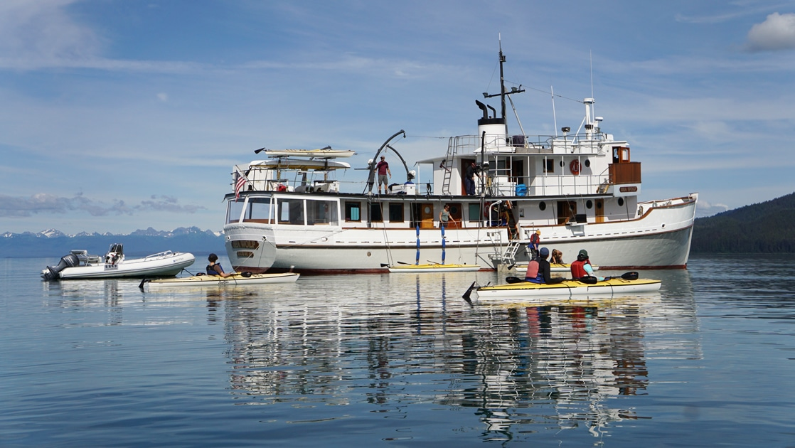 small ship sea wolf floats in Alaska's Glacier Bay as travelers paddle yellow and white kayaks around the ship.