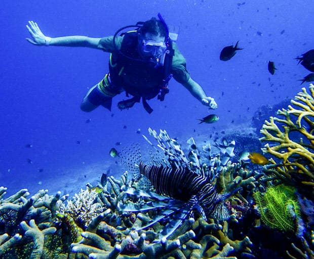 Snorkeler in front of a lion fish in the South Pacific.