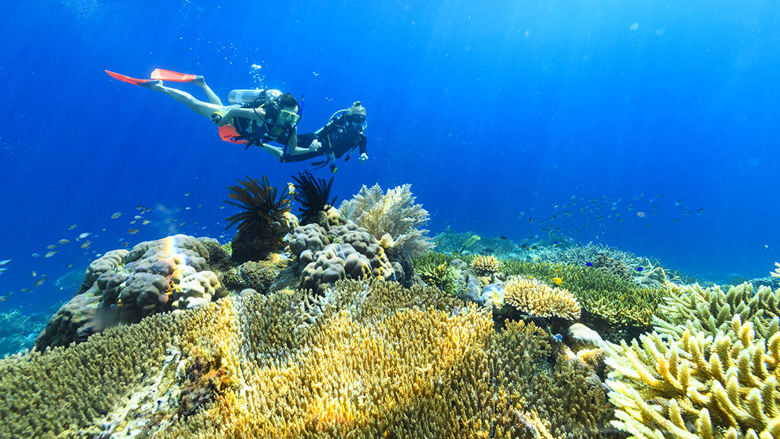 Two divers survey colorful yellow coral in bright blue waters during the Spice Islands & Raja Ampat small ship cruise in Indonesia.