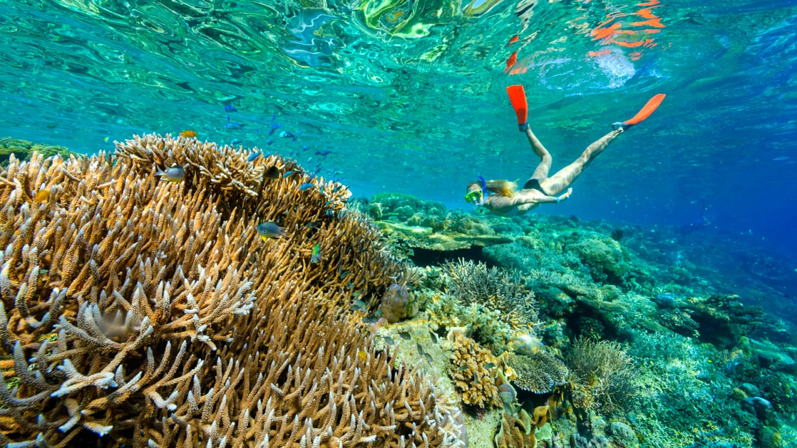 Woman snorkeler looks at brightly colored coral in emerald green waters during the Spice Islands & Raja Ampat small ship cruise in Indonesia.