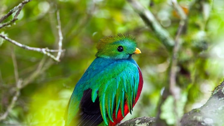 green, blue and red bird on tropical volcano & cloud forest land tour in costa rica