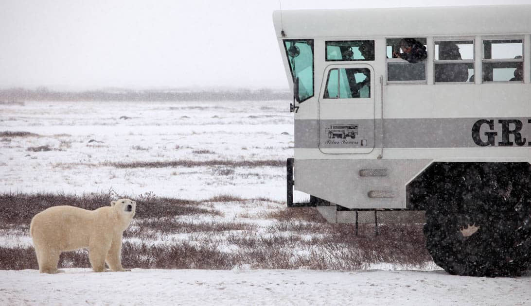 A polar bear standing in front of the polar rover on the tundra.