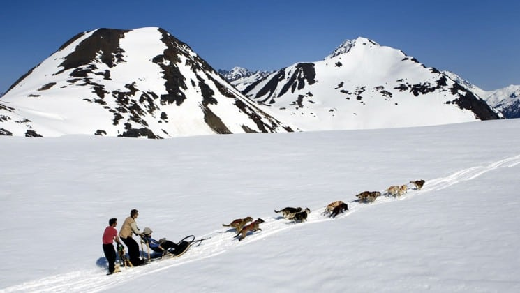 two people dogsledding pulled by several dogs on ultimate alaska adventure trip