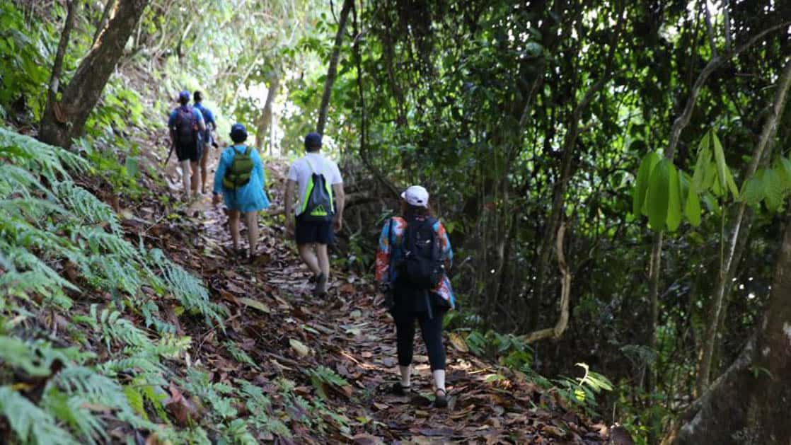 small ship cruise travelers on a costa rica jungle tour with thick green foliage around them