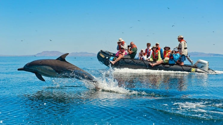 group of adventure travelers in a zodiac skiff watch a dolphin jump out of the water on the whales and wildness spring in the sea of cortez small ship cruise