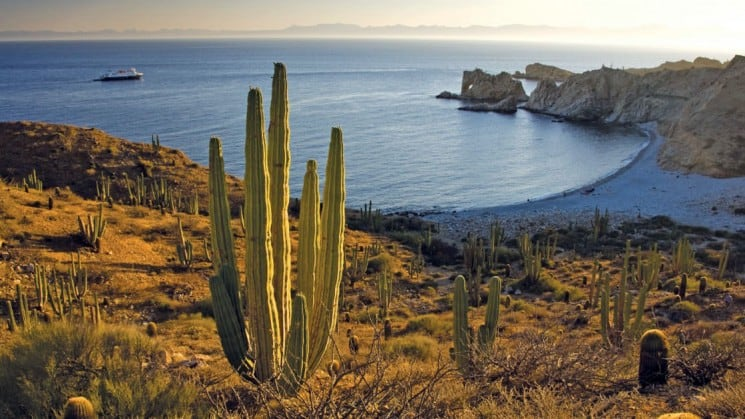 overlooking the sea of cortez from a field of cacti on a sunny day in baja california