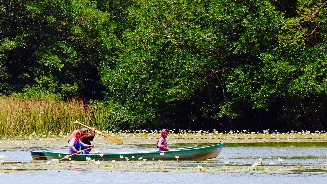three women in a canoe with one riding, one paddling and another holding up a paddle alongside lily pads and forested shoreline on a sunny day