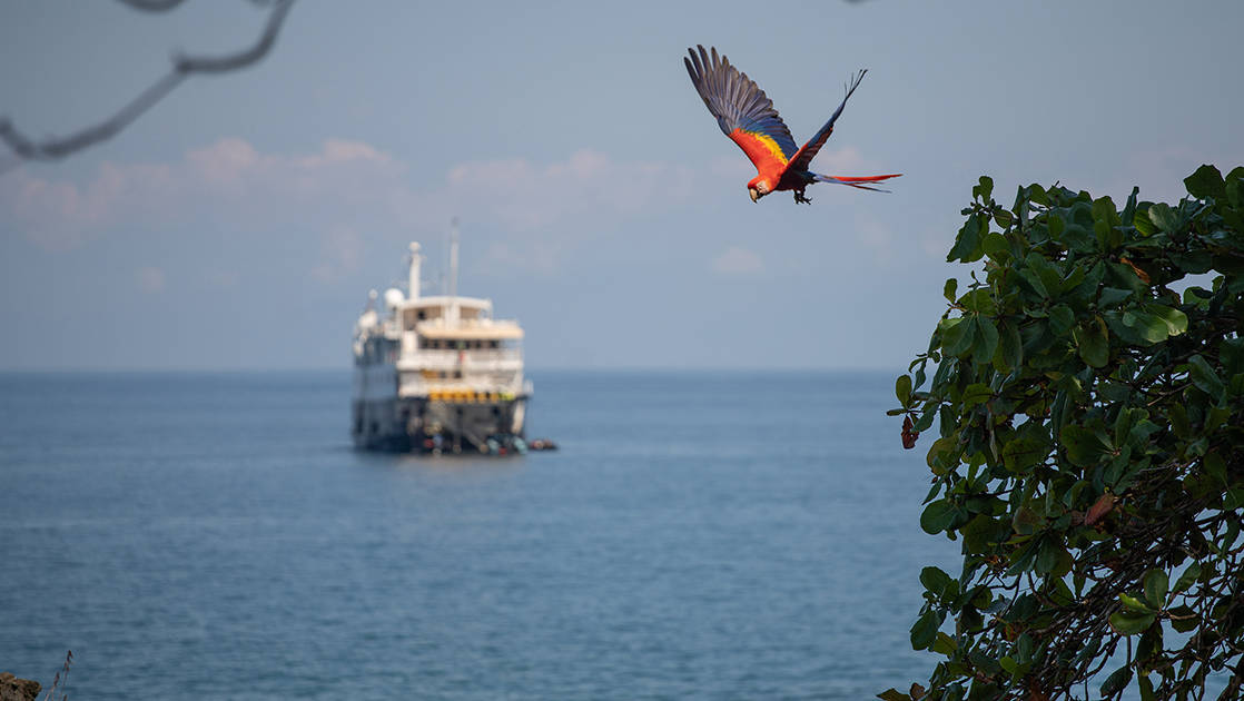 Scarlet macaw flying above the Safari Voyager luxury expedition ship in Belize on a sunny day.