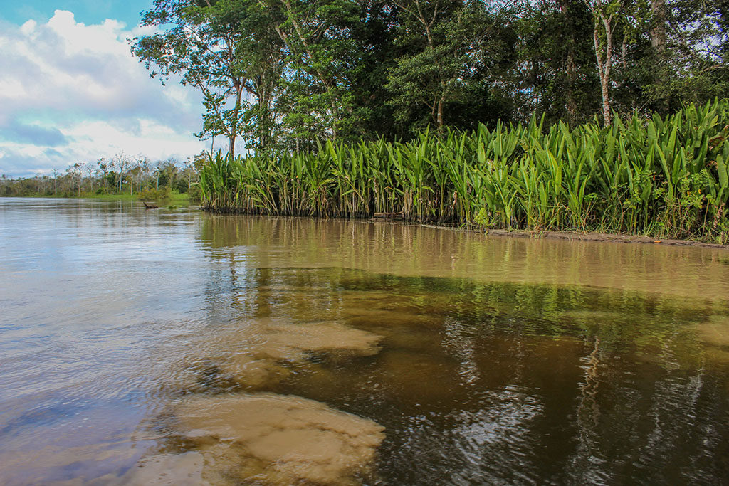 Black water and muddy water of the Amazon River converging along the shoreline
