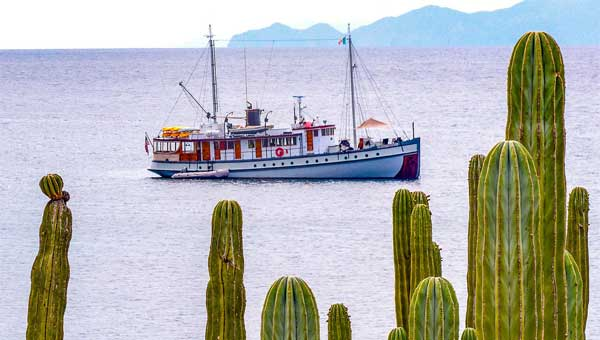 A small Baja cruise ship sails in the Sea of Cortez with a large green cactus in the foreground
