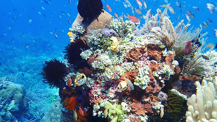 Dazzling coral reef and fish of all colors in the turquoise waters of Indonesia.