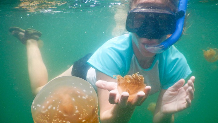 Woman snorkeling in emerald water with a stingless jellyfish in her hand, in Indonesia.