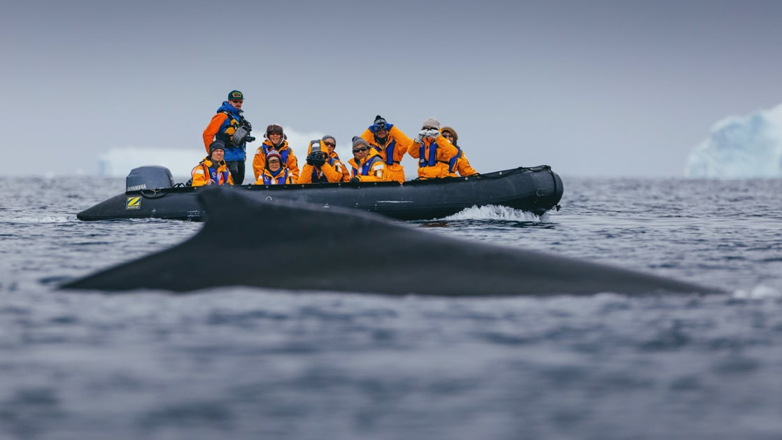 Polar travelers spot a minke whale while Zodiac cruising on an overcast day in Antarctica.
