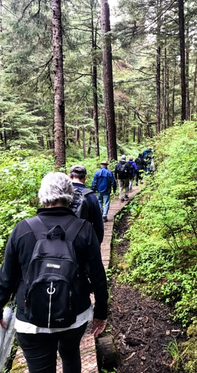 A photo taken from the back of a line of a group of hikers as they make their way across a wooden pathway surrounded by lush forest as aprt of a shore excursion on an Alaska cruise