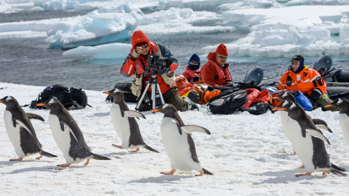 Polar travelers in bright red jackets sit and photograph passing gentoo penguins on the Antarctic Southern Latitudes cruise.