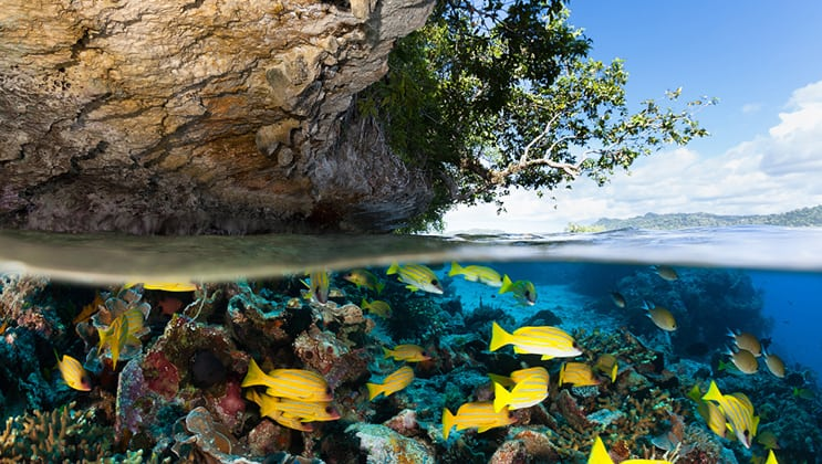 Tropical island above water and below water, yellow striped fish & colorful coral as seen on the Aqua Blu Raja Ampat Indonesia small ship cruise.