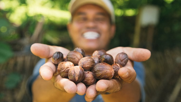 Man holds out nutmeg fruit during the Aqua Blu Ambon & Spice Islands Cruise in Indonesia.