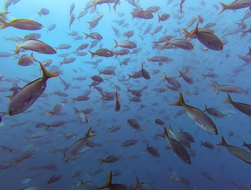 an underwater shot of a dense school of hundreds of fish
