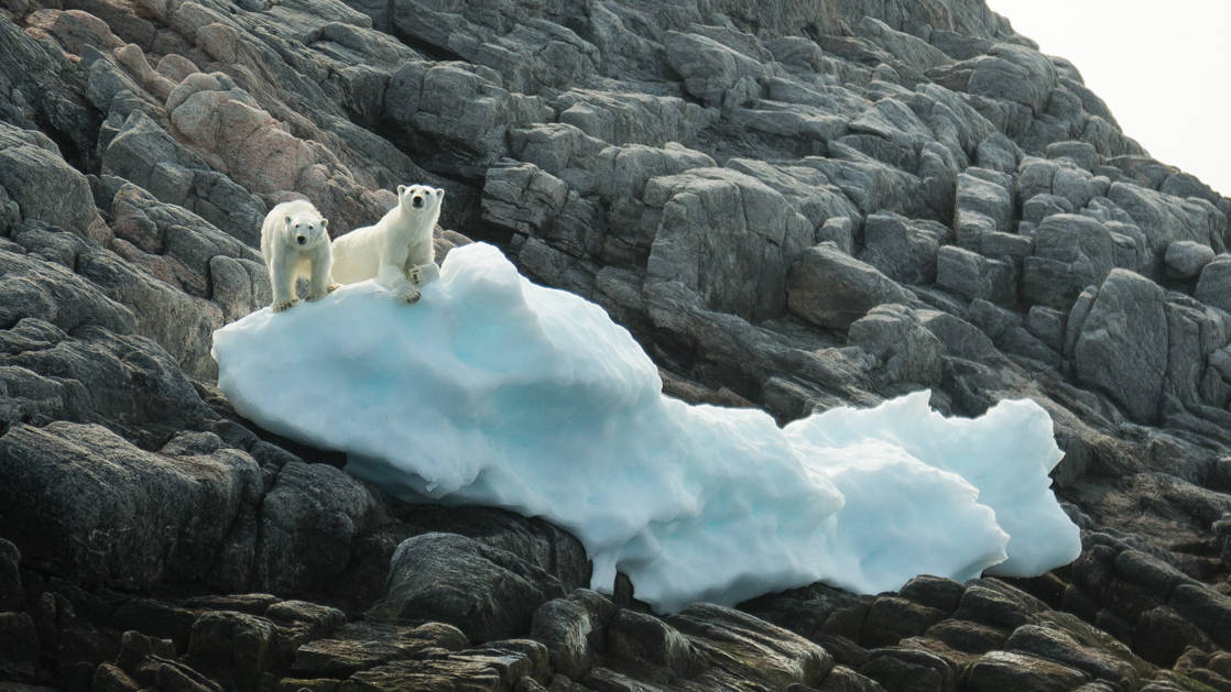 2 polar bears stand on a small, snowy berg surrounded by gray boulders, seen during The Northwest Passage Canadian High Arctic voyage.