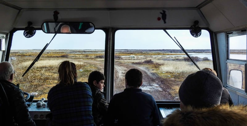 a photo taken from inside the polar rover off-road bus out the front window, 5 guests are looking out of the windshield at a polar bear who is walking 100 feet away along the fall colors of the Canadian arctic, the guests are all part of the classic polar bear adventure land tour